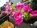 Kwiaty przed domkiem - Gościniec nad Bukówką